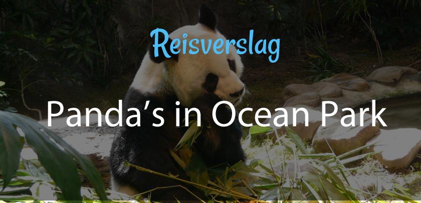 Panda's in Ocean Park